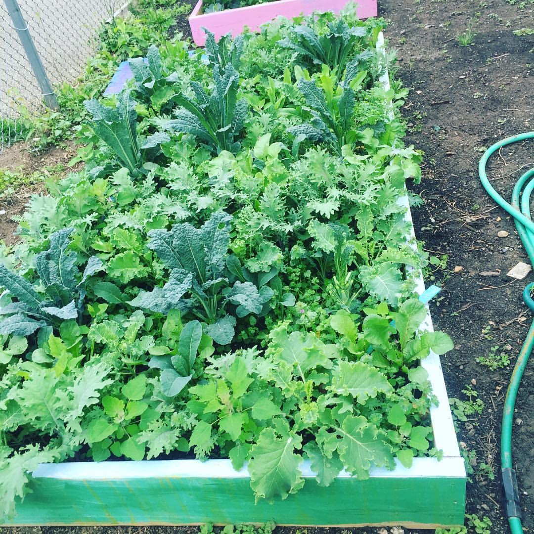 Summer garden help needed seaton elementary school for Landscaping help
