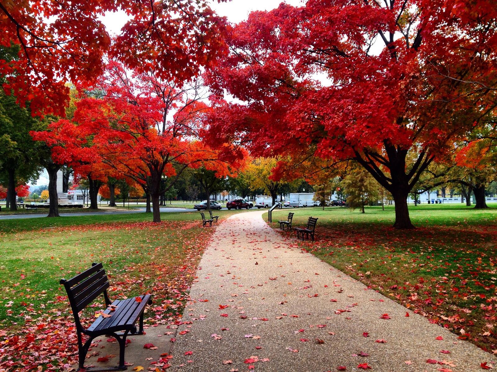 Fall leaves in D.C.